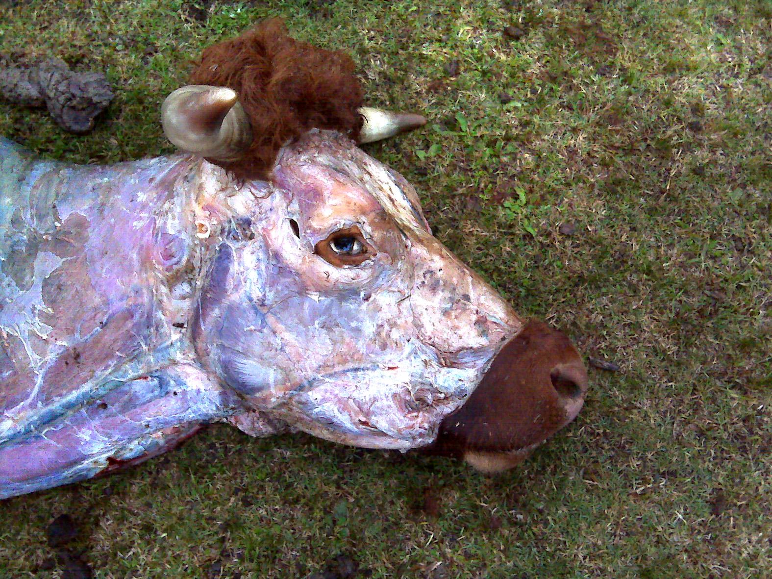 Toro muerto. Foto: Daniel Erosa
